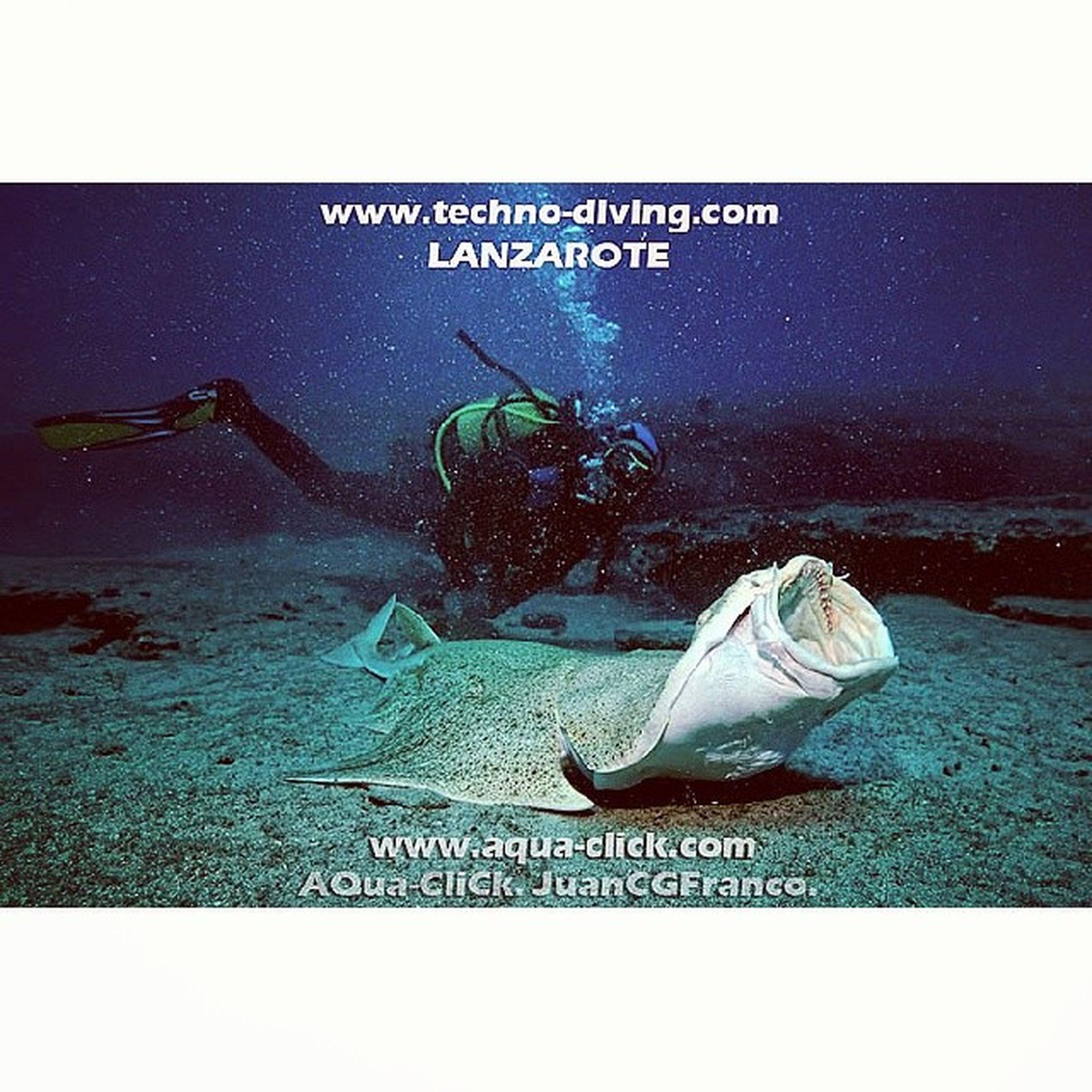 Underwaterphotography Angelshark Lanzarote Diving