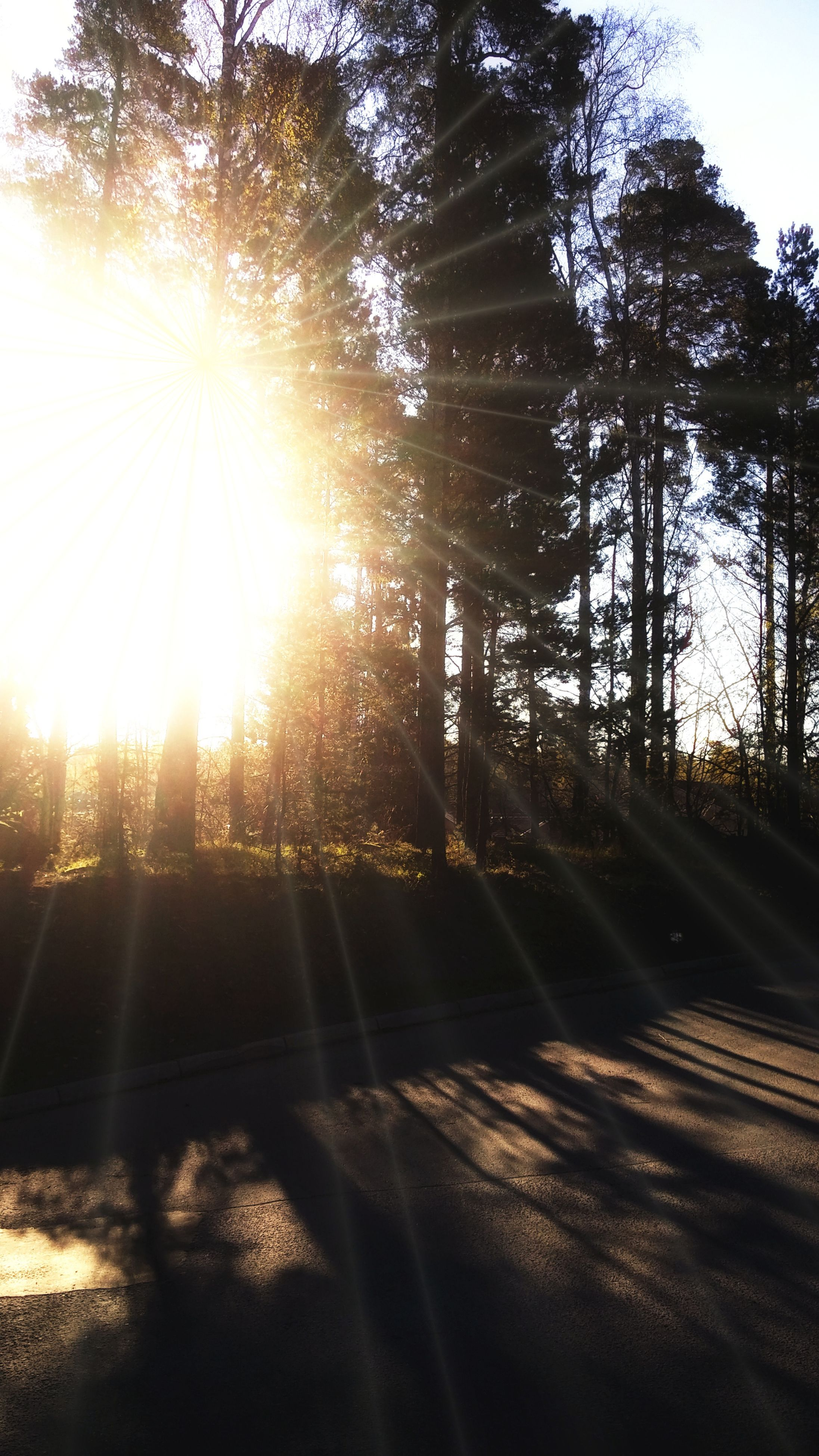 tree, sunbeam, sunlight, sun, lens flare, nature, bright, no people, tranquility, tranquil scene, scenics, road, beauty in nature, day, forest, landscape, outdoors, sunset, sky