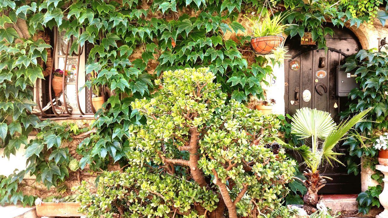 Plants Little House Looksgreat EyeEmNewHere