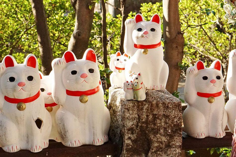 世田谷区 豪徳寺 Animal Representation No People Temple Cat 招き猫 Japan Tokyo Culture Eye4photography