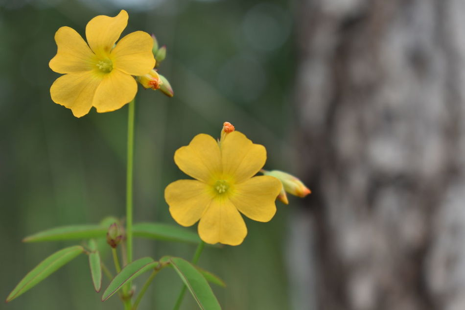 Flores Flor Natureza 🐦🌳 Nature Flower Flowers