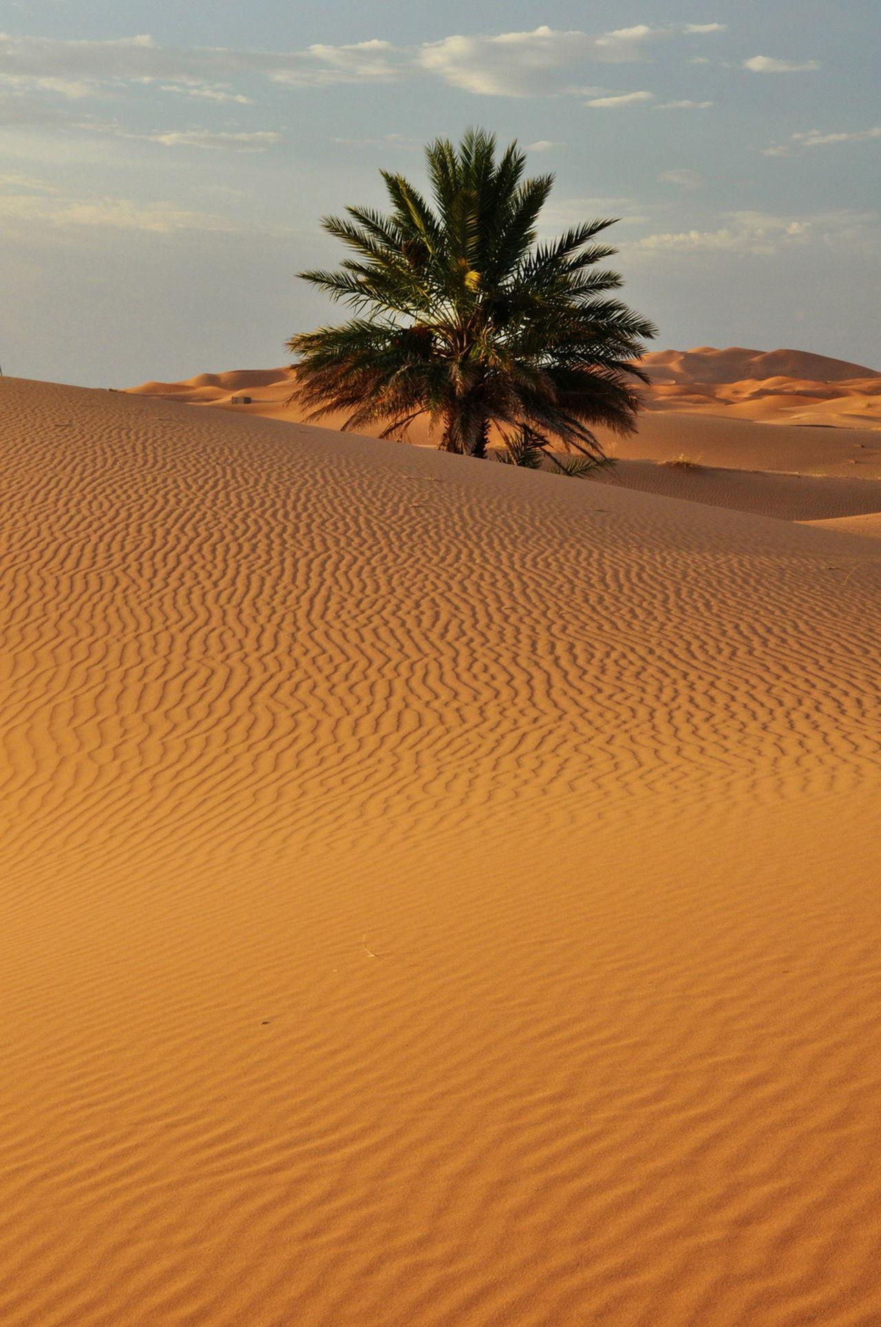 Beautiful stock photos of desert, Calm, Day, Desert, Landscape