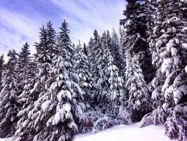 Apex Mountain Resort, Penticton, British Columbia, Canada Apex Mountain Snow Skiing Nature Snow Trees Penticton Britishcolumbia Canada Winter