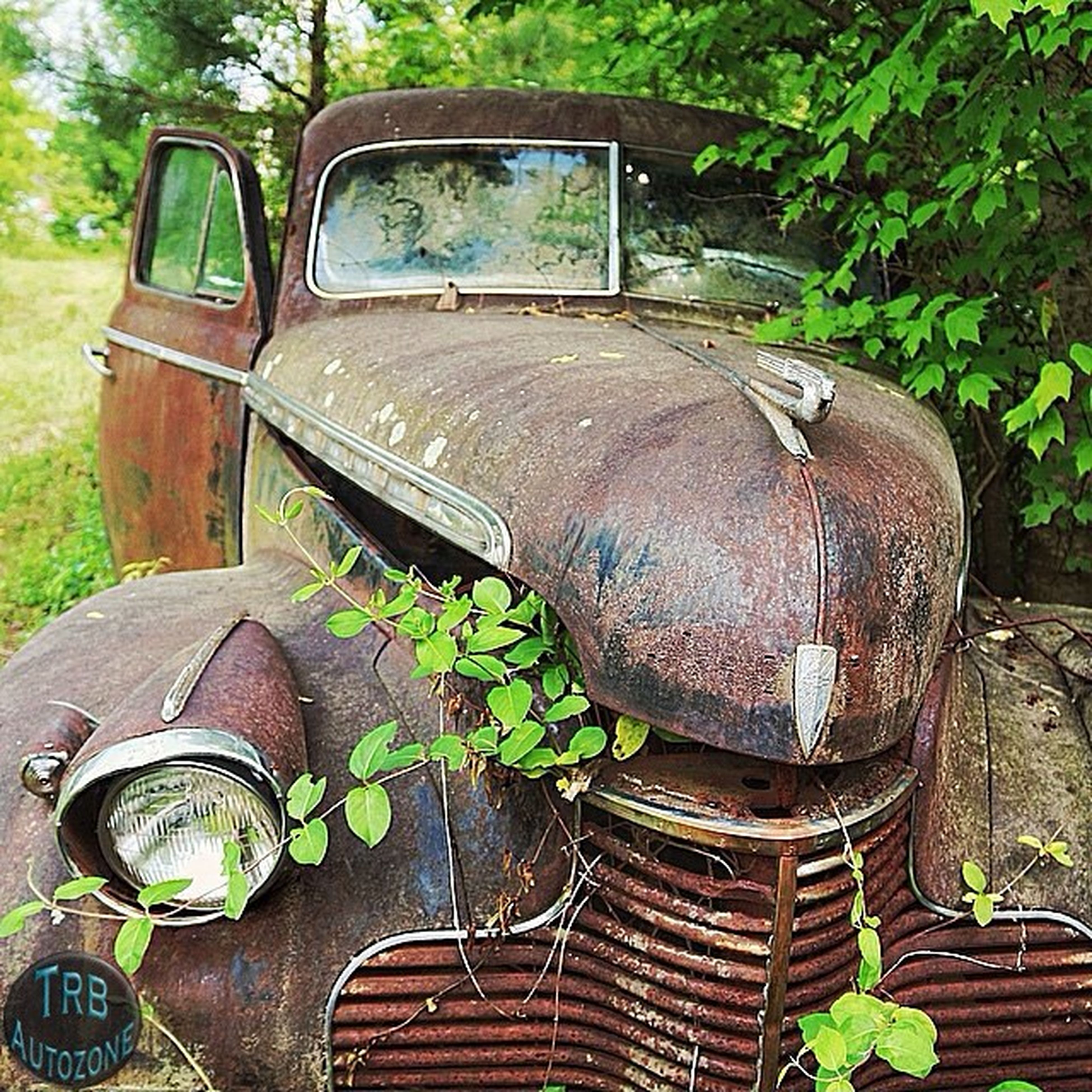 old, abandoned, old-fashioned, land vehicle, obsolete, car, rusty, retro styled, mode of transport, transportation, run-down, day, plant, damaged, tree, outdoors, sunlight, grass, no people, metal