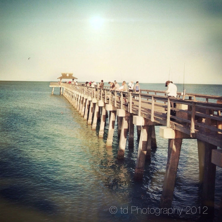 Nature at City Of Naples Pier by t_h_e_d_a_v_i_d