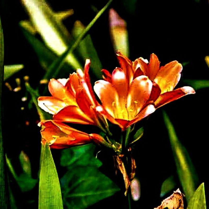 Flowers Spring Garden Photography