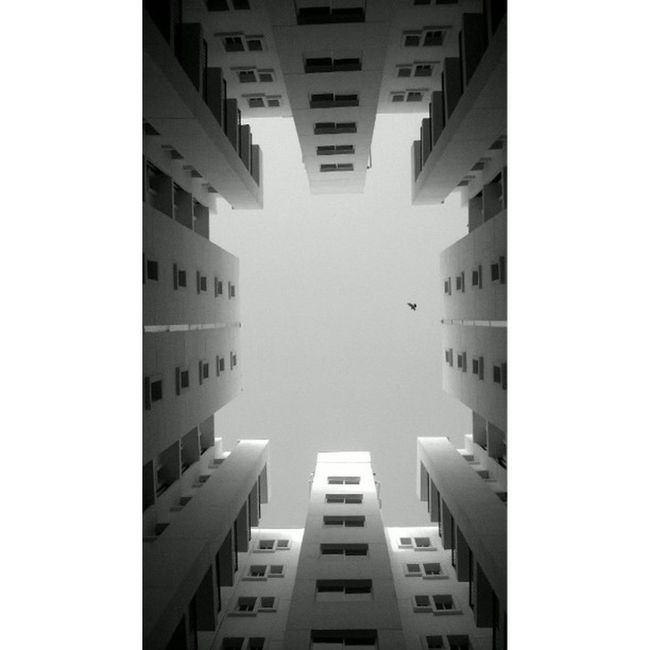 Bnw Bw Blackandwhite Black And White Igblacknwhite Insta_bw Bnwsociety Monochrome Masterofwhiteness Bnw_minimal Mm_bnw Bnw_mnml Ig_global_bw Shapes Bnw Bw Blackandwhite Black And White Igblacknwhite Insta_bw Bnwsociety Monochrome Masterofwhiteness Bnw_minimal Mm_bnw bnw_mnml ig_global_bw shapes illusion light bird
