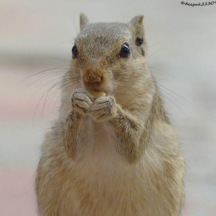 Squirrels Squirrel Beauty Beautyful  Beautycaremurah Hdr_captures HDR Hdr_pics Hdr_lovers Beautyful  Jaipurdiaries 🎀 Jaipurdiaries Panasonic  Fz200 Dausa Nature Ig_naturelovers Naturelovers