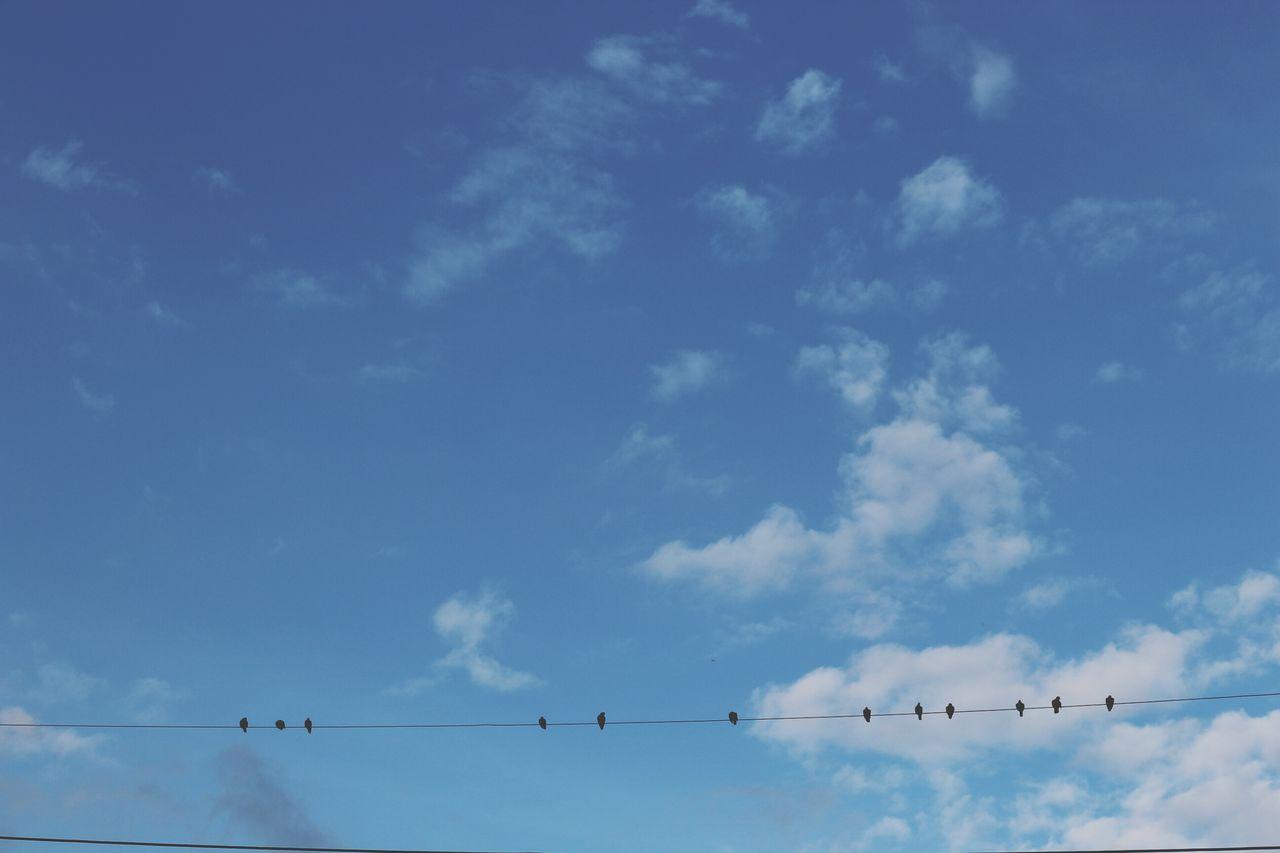 Bluesky Birdsonwires Birdsonthesky Birdsonaline Hometown Hometown Sky Countryside Lopburi Location