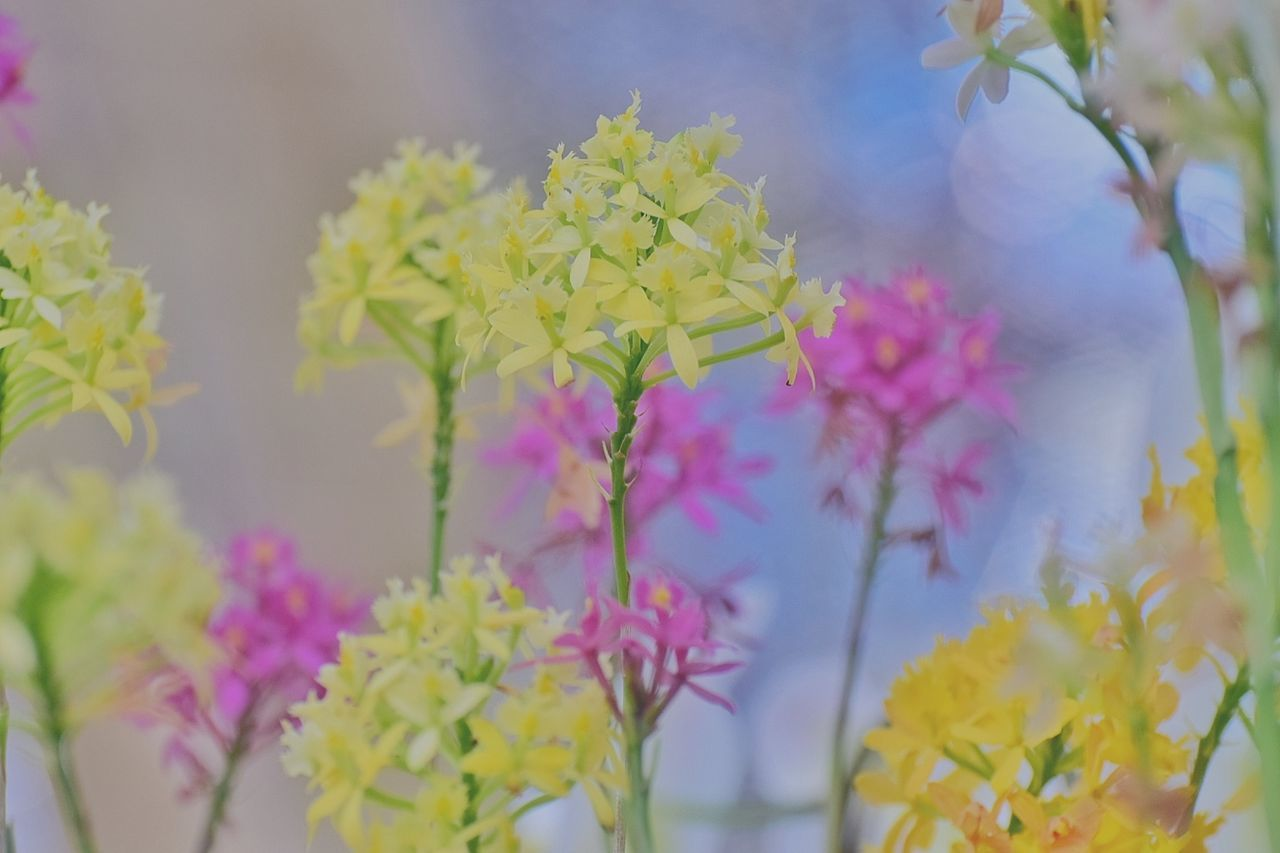 Flower Plant Nature Growth Close-up Pink Color No People Outdoors Beauty In Nature Branch Fragility Flower Head Day Exceptional Photographs EyeEm Nature Lover Coulor Of Life Pastel Power Pastel