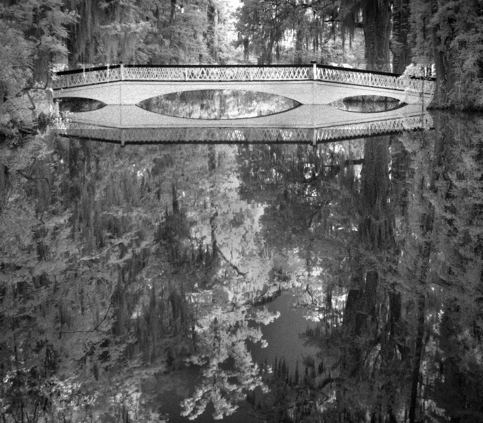 Beauty In Nature Bride Bridge Reflections Built Structure Infrared Magnolia Tree No People Reflection Reflections Tourism Tranquility Travel Destinations White Bridge At Magnolia White Color