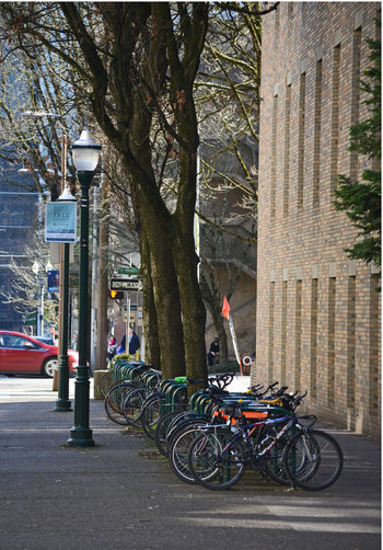 Bicycle Bicycle Parking Bicycles Bicycles Galore Bicycles In A Row Bike Bike Rack Bikes Bikes In A Row Cityscape Cityscapes College Life Everything In Its Place Parked Bike Portland Portland, OR PSU Street Photography University Campus University Life Urban Landscape Urban Photography Urban Street Photography Urban Streets Here Belongs To Me