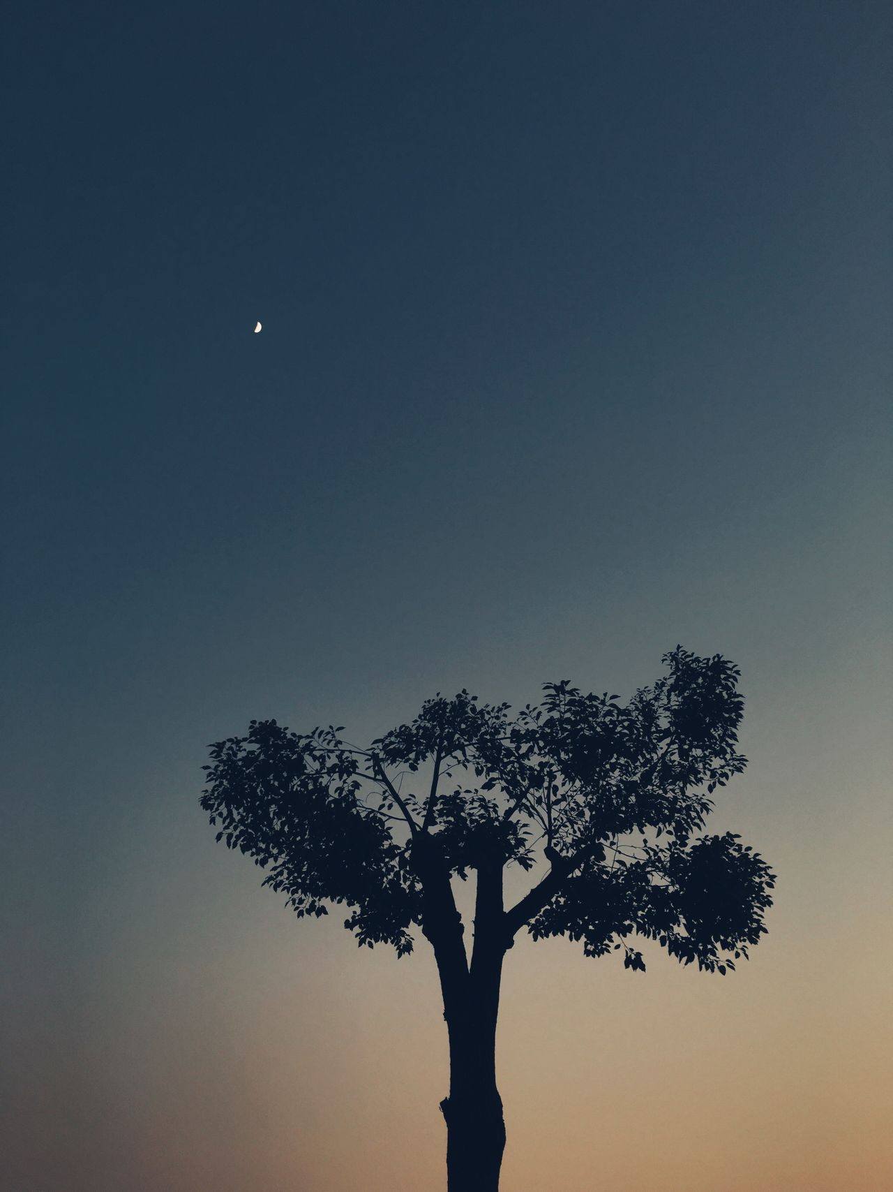 Beautiful stock photos of sky,  Beauty In Nature,  Branch,  China,  China - East Asia