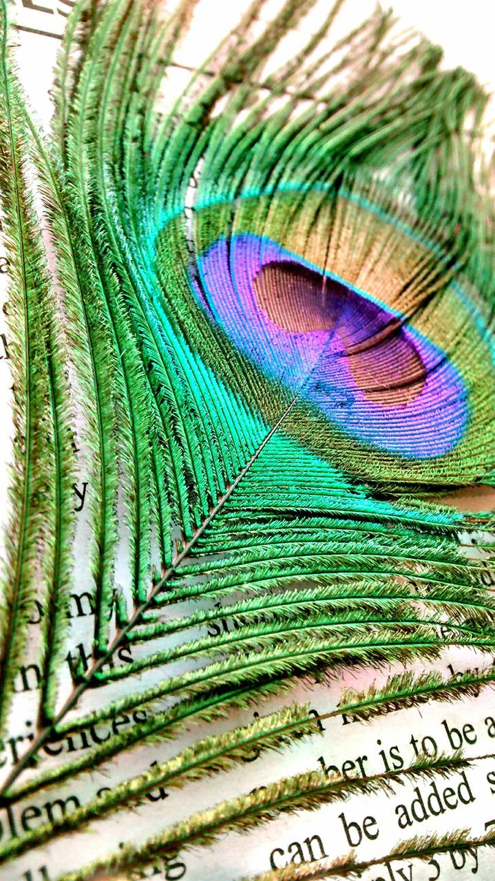 Detail Shot Of Peacock Feather