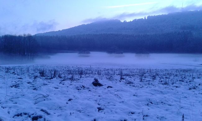 Cold Cold Temperature Fog My Winter Favorites Outdoors Snow Tree Winter