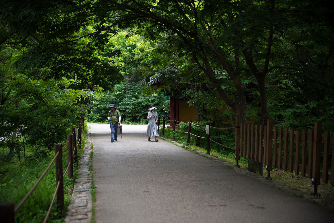 walk way near Baekdamsa Buddhist temple in South Korea ASIA Buddhist Temple Diminishing Perspective Eastern Eastern Asia Far East Feel The Journey Forest Green Color Hiking Korea Lifestyles Monk  Original Experiences Outdoors Pathway Taking A Walk Temple Tranquil On The Way Tranquility Tranqulity Treelined Walk People And Places