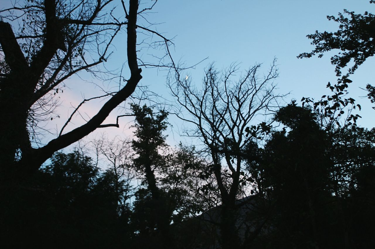 tree, low angle view, nature, branch, silhouette, beauty in nature, growth, tree trunk, tranquility, outdoors, sky, no people, day, forest, tranquil scene, scenics