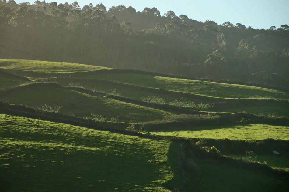 Terceira Island, Azores - Portugal Agriculture Atlantida Azores Azores, Terceira Beauty In Nature Day Field Green Color Growth Landscape Mountain Nature No People Ocean Outdoors Paradise Portugal Rural Scene Scenics Sky Social Issues Terceira Island Tranquility Tree Water