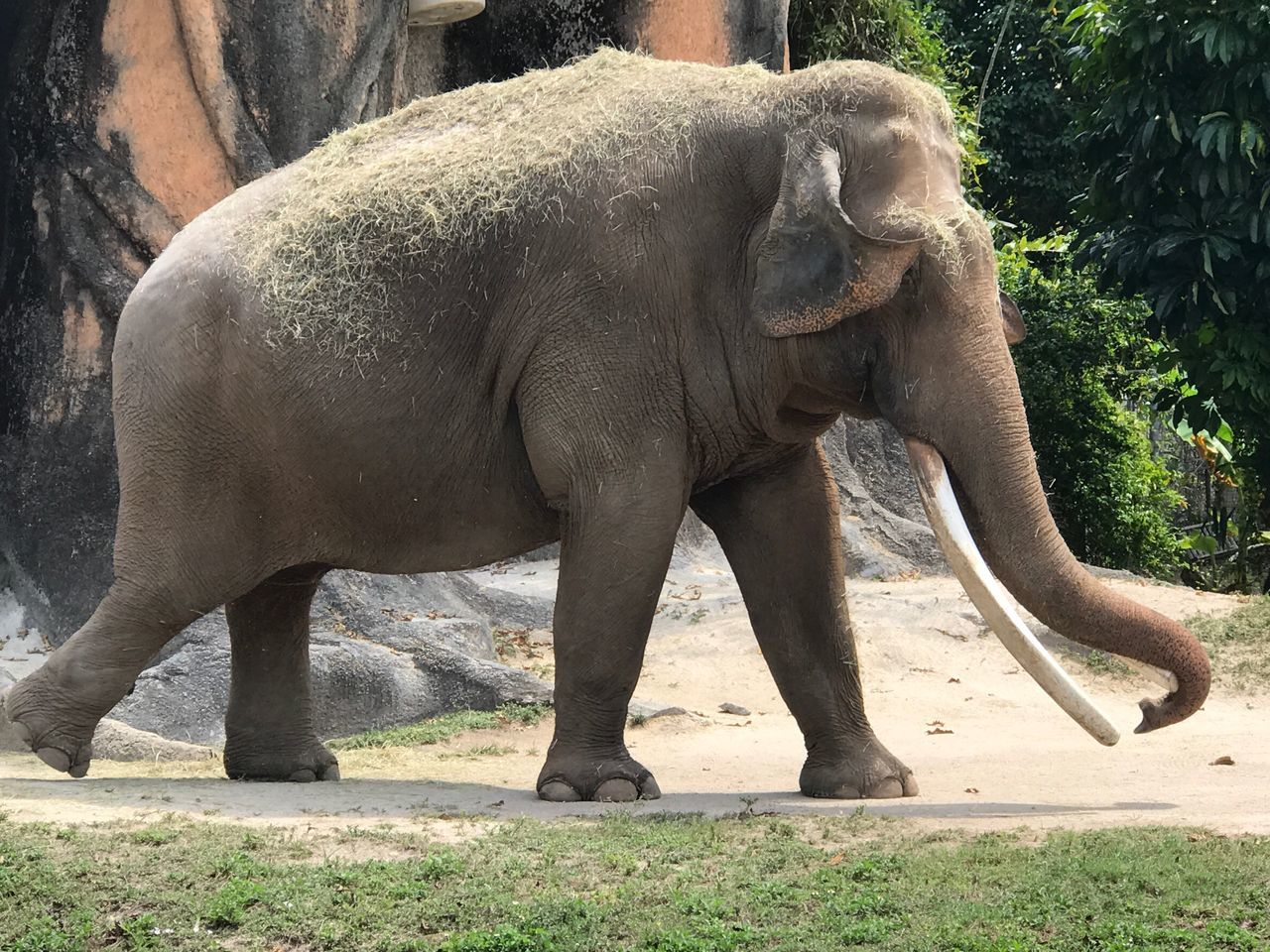 Animals In The Wild Animal Wildlife One Animal Mammal Zoo Animal Themes Elephant Day Outdoors Side View No People Safari Animals Nature Animal Trunk Tusk Close-up