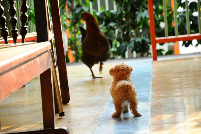 Dog❤ Dogslife Litlemonster Memorial La pequeña Moly