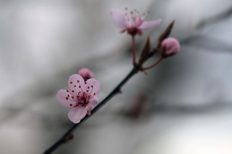 Hello World Have A Nice Day♥ Canonphotography Nature Photography Flowers, Nature And Beauty Kirschblüte Cherry Blossom Blossom Flower Natur Nature Nature_collection Nature On Your Doorstep Eyemphotography Urban Spring Fever