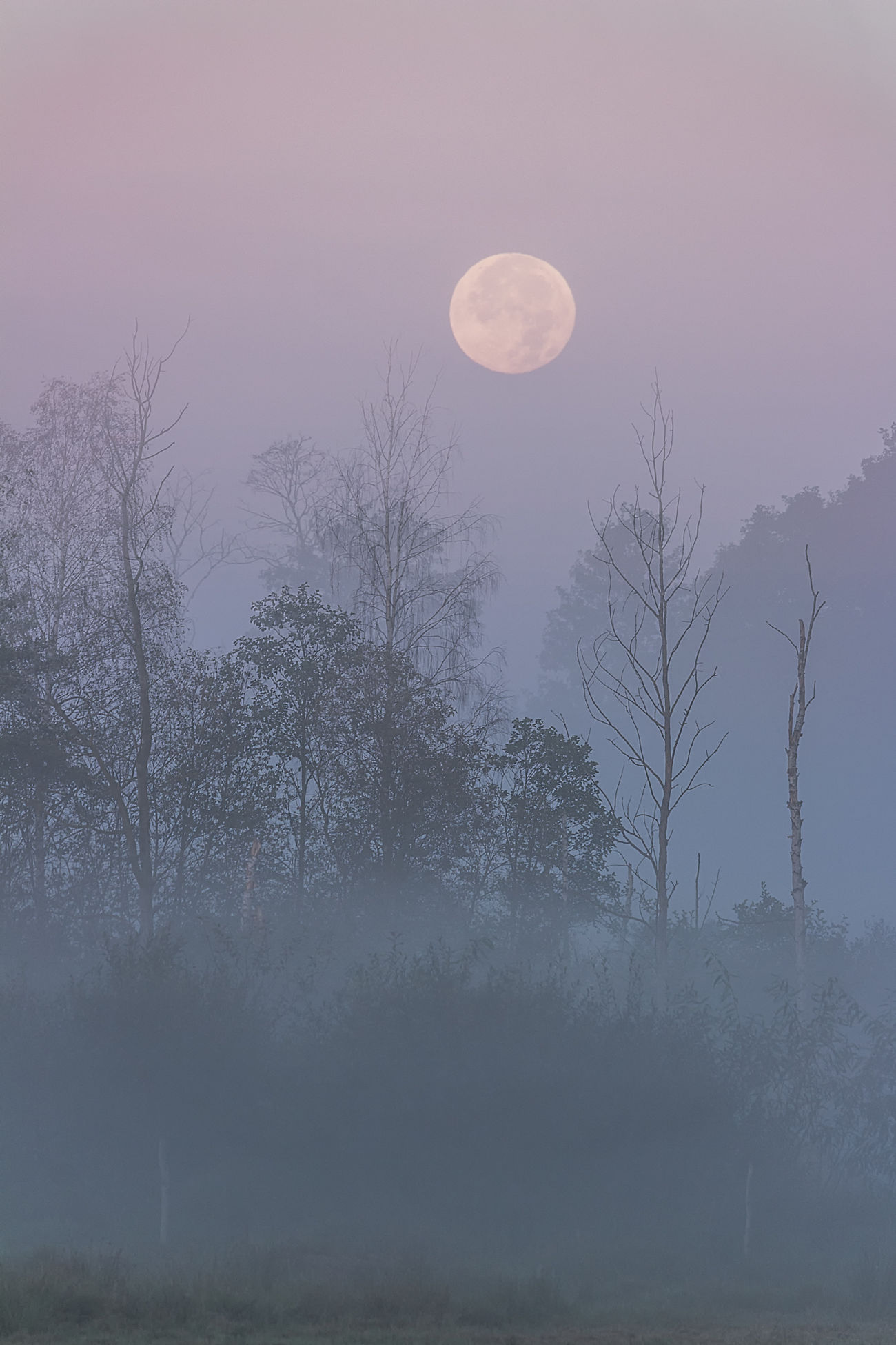 Moonset over Kampninos National Park Forest Full Moon Landscape Moon Moonset Morning Nature Outdoors Tree