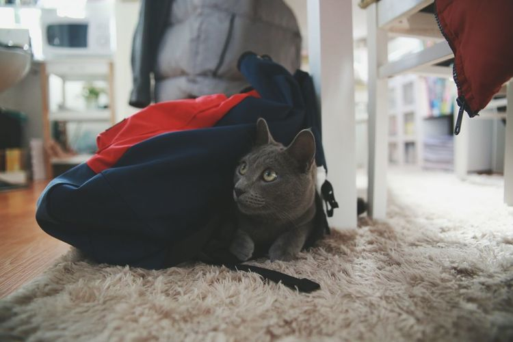 Do you see me~? Playing Hide And Seek  😼😺my Cat Check This Out With My Precious Russianbluecat Canon 6D From My Point Of View At Home My Great Loves