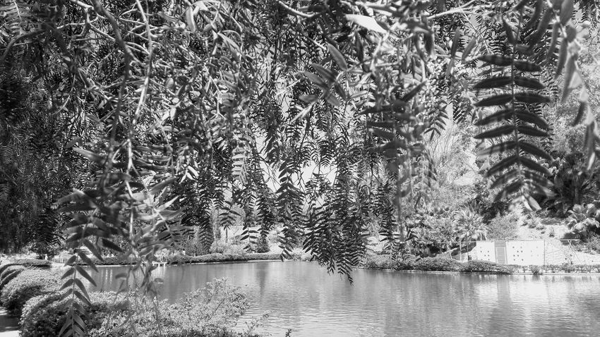 Blackandwhite Black And White Beauty In Nature Benalmádena, Malaga, Spain New On Eyeem Live For The Story EyeEm Best Shots Málaga Spain ❤ No People Water Reflection Backgrounds Lake Day Outdoors Waterfront Nature Full Frame Beauty In Nature Close-up Sky The Great Outdoors - 2017 EyeEm Awards Black And White Friday