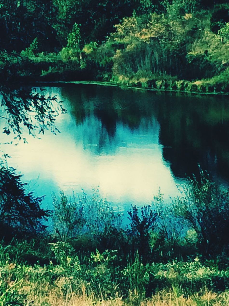 Outdoor Photography Breathtakingly Beautiful Sunsetsniper View From Above Views & Insights & Overviews Cedar Lakes Ripley Wv Tranquil Scene Lake Nature Water Tranquility Scenics Tree Reflection Outdoors Beauty In Nature Forest Idyllic Calm Majestic Non-urban Scene Remote Growth Plant