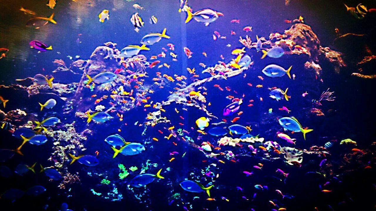 Under the sea 🎶 Monterey Bay Aquarium Colorful Swimming With The Fish Underwater Aquariumfish Aquarium Life Fishtank Watercolor Making The World Colorful
