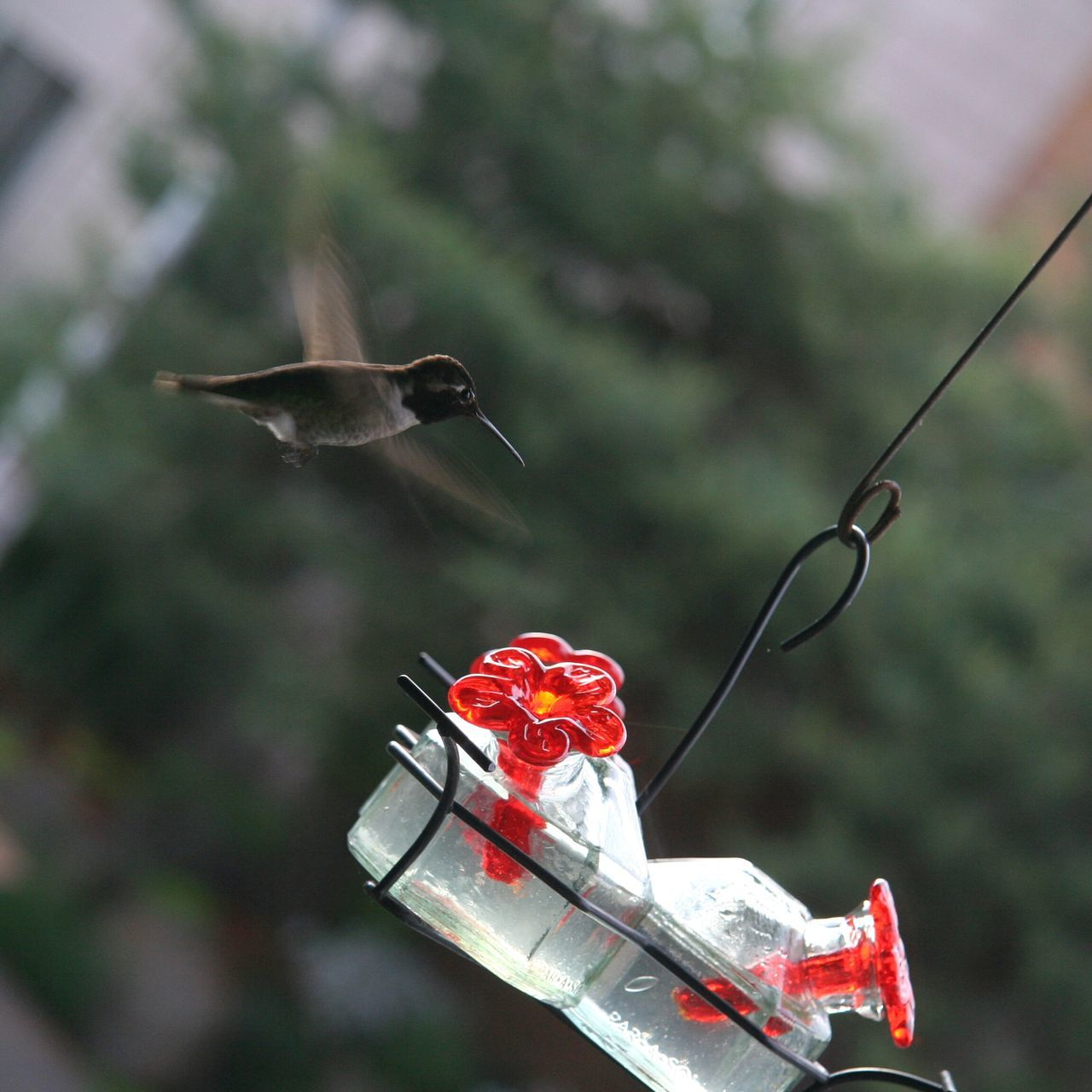 Close-Up Of Hummingbird Flying