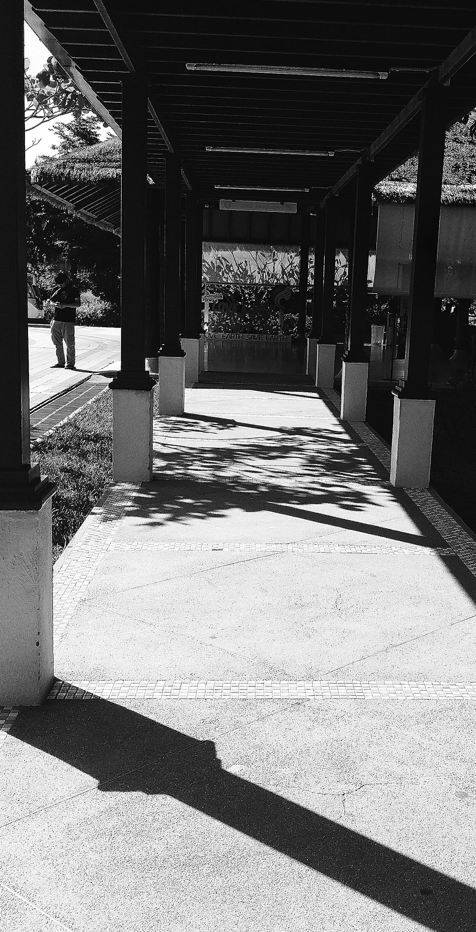 Trees Son Light And Shadow Shadows Koh Samui Airport Thailand Travelphotography Streetphotography Bnw Bnwcollection Bnwphotography Bnw_life Bnw_travel Bnw_captures Bnw_world Bnw_kohsamui Bnw_thailand Eyeemkohsamui Eyeemthailand Eyeemcollection Eyeemphotography Eyeem Streetphotography