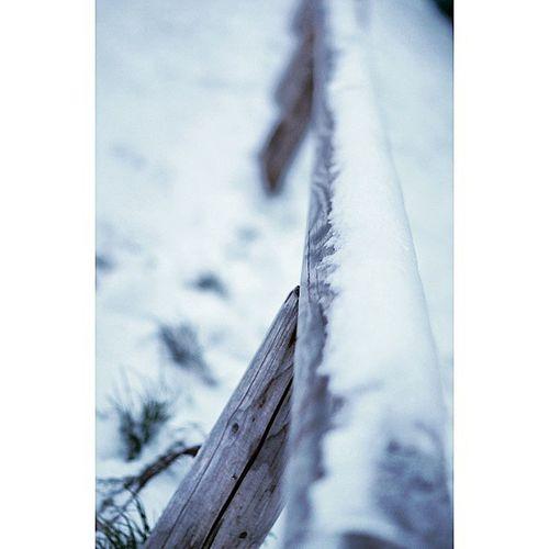 At Marienhof covered in Snow . Near Marienplatz . Snowing in Munich. white winter. munich münchen bayarn Deutschland Germany. Taken by my SonyAlpha dslr A57. ثلج شتاء حديقة ساحة بلدية بافاريا ميونخ المانيا