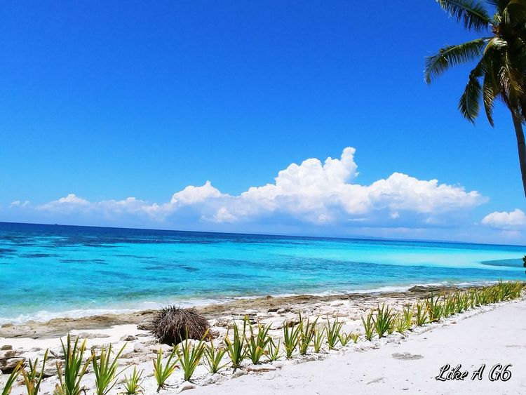 Sea Beach Island Blue Sky Sand Tropical Climate Sunny Palm Tree Horizon Over Water Vacations Travel Destinations Tree Nature Outdoors Cloud - Sky Tourist Resort Water Cellphone Photography Wheninleyte Kalanggaman Island Lgg6