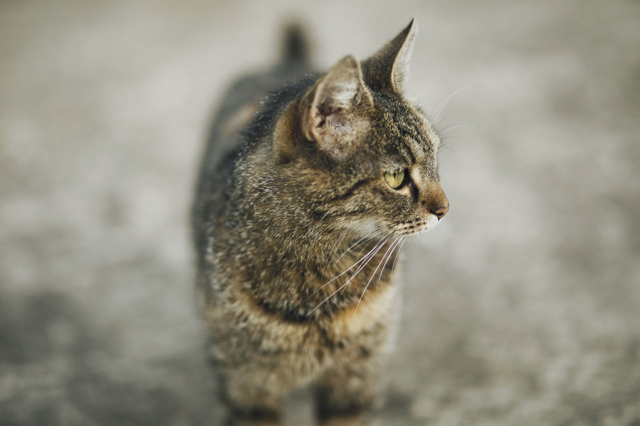Lazy Sunday in Mielec, Poland. Animal Themes Close-up Day Domestic Animals Domestic Cat Feline Focus On Foreground Mammal No People One Animal Outdoors Pets