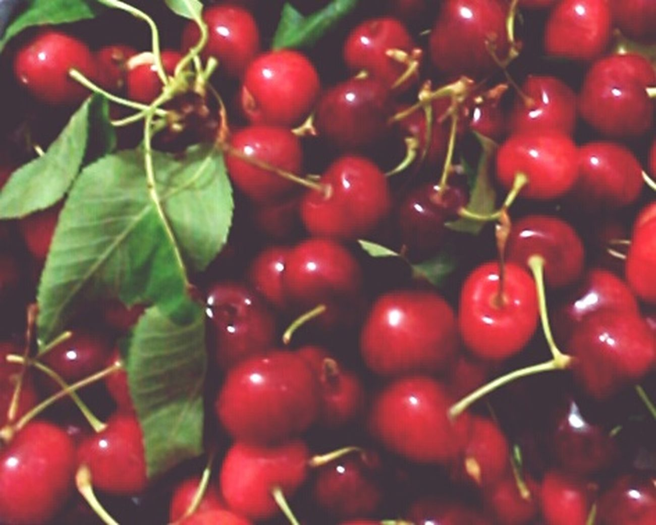 Cherry ○.○ Hello World Hi! Everybody Eyeem Market EyeEm Best Edits Eyeem Turkey EyeEm EyeEm Best Shots EyeEm Team EyeEm Gallery Taking Photos I'm Good Nopeople Nature_collection Naturelovers Cherrys Cherryred Ereğli Good Times World Ankara Turkey