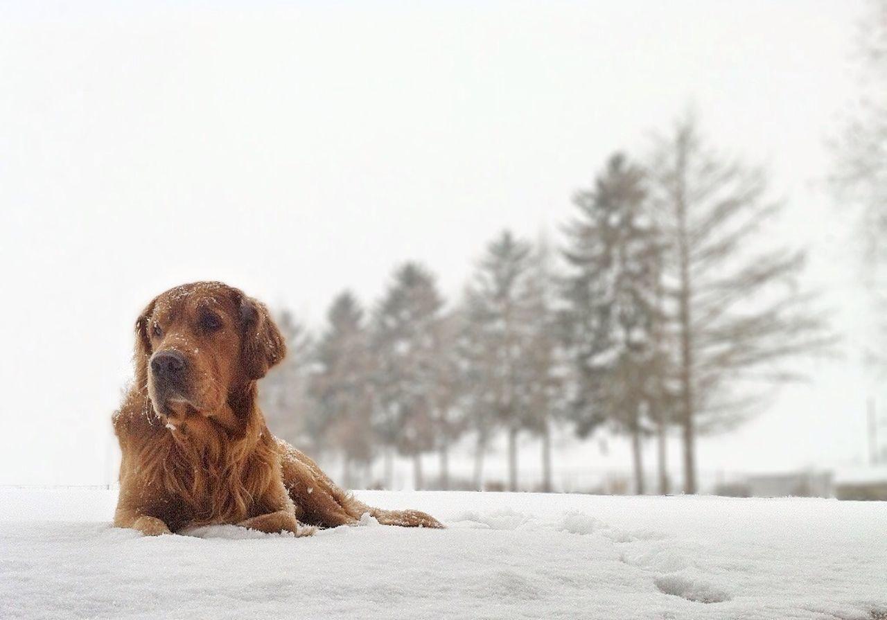 Beautiful stock photos of pets, NULL