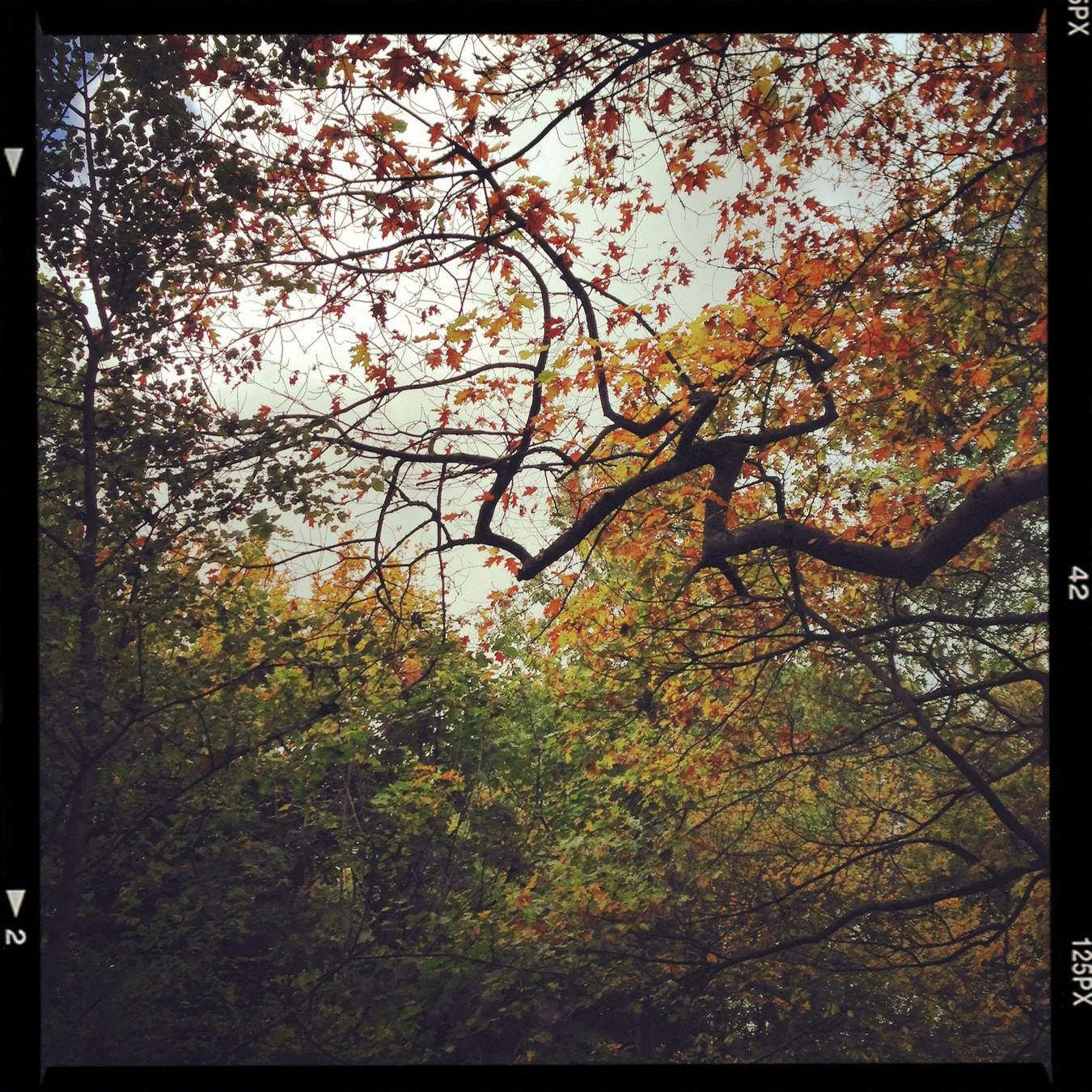 Nature London Park Thehuffingtonpost