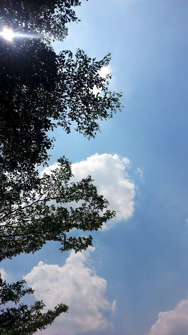 what a beautiful day! Skylovers Naturelovers Iseeilikeisnap Thelittlethings Natureonyourdoorstep