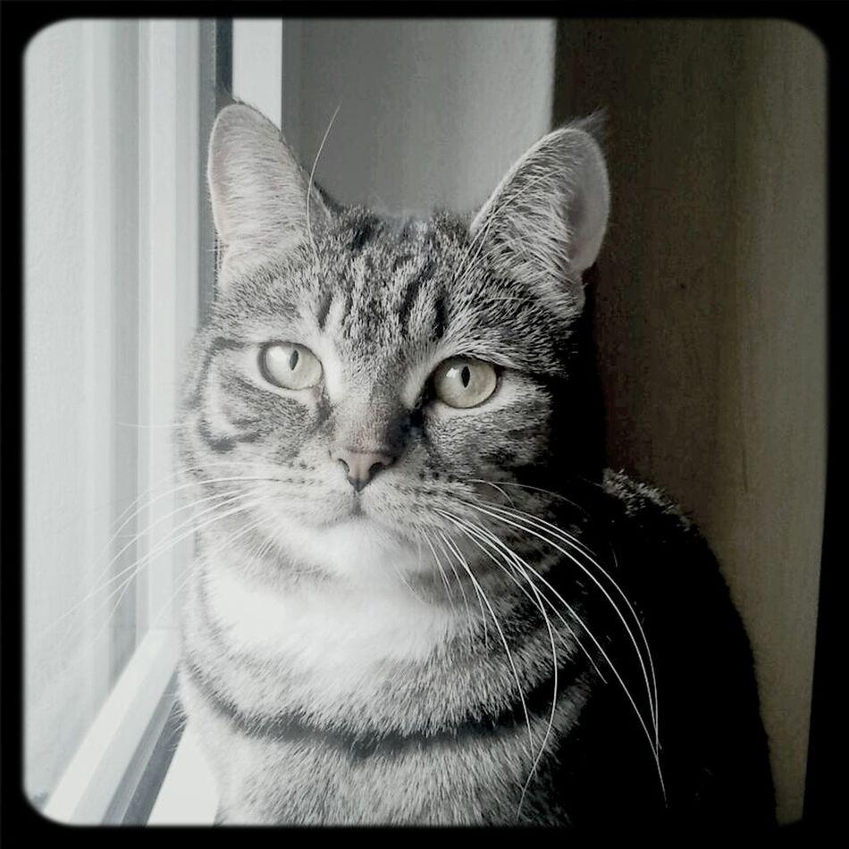 Pauli the Cat