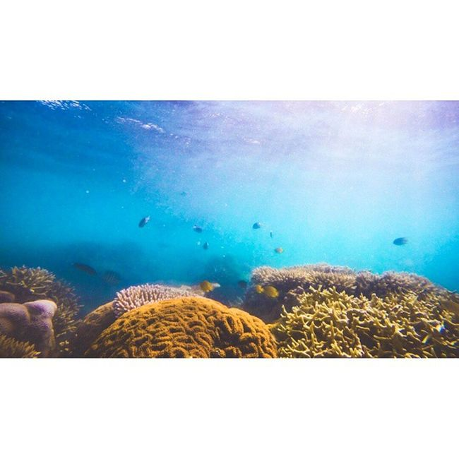 Missing the great barrier reef. I ought to go back there. Soon, soon. Australia Greatbarrierreef Whitsundays Whyamiinns Wheregottime