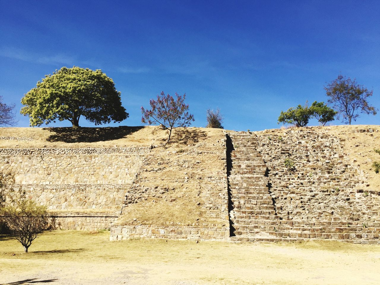 Monte Alban No People Nature Tree Built Structure Day Architecture Outdoors Growth Low Angle View Building Exterior Sky