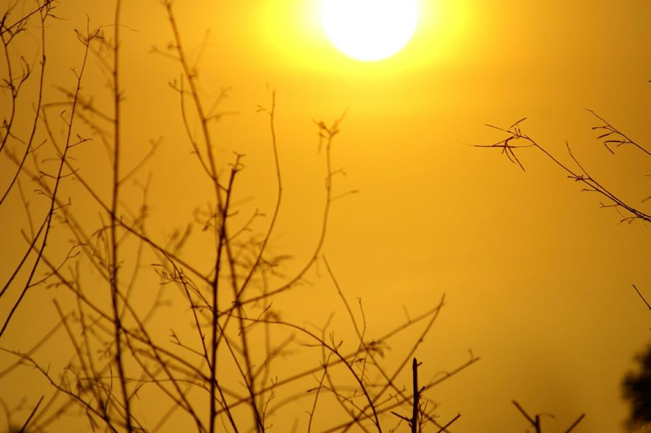Glitch Sunlight Learn & Shoot: Single Light Source Getting Inspired Golden Moment Golden Light Golden Slumbers Sunset Silhouettes Sunsets Tree Branches 43 Golden Moments
