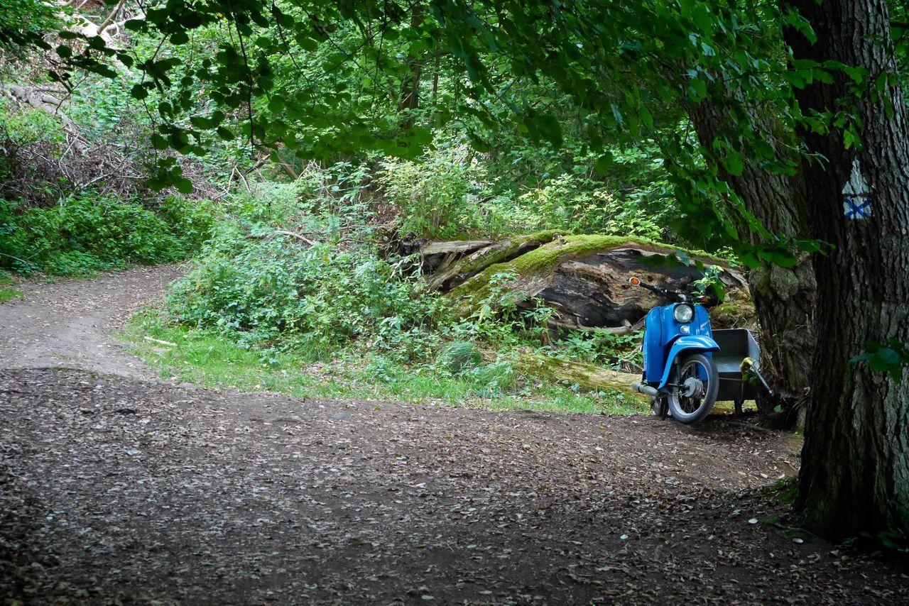 Bike East Germany Footpath Motorbike Nature Old Motorbike Outdoors Schmaler Luzin Tranquility Wood