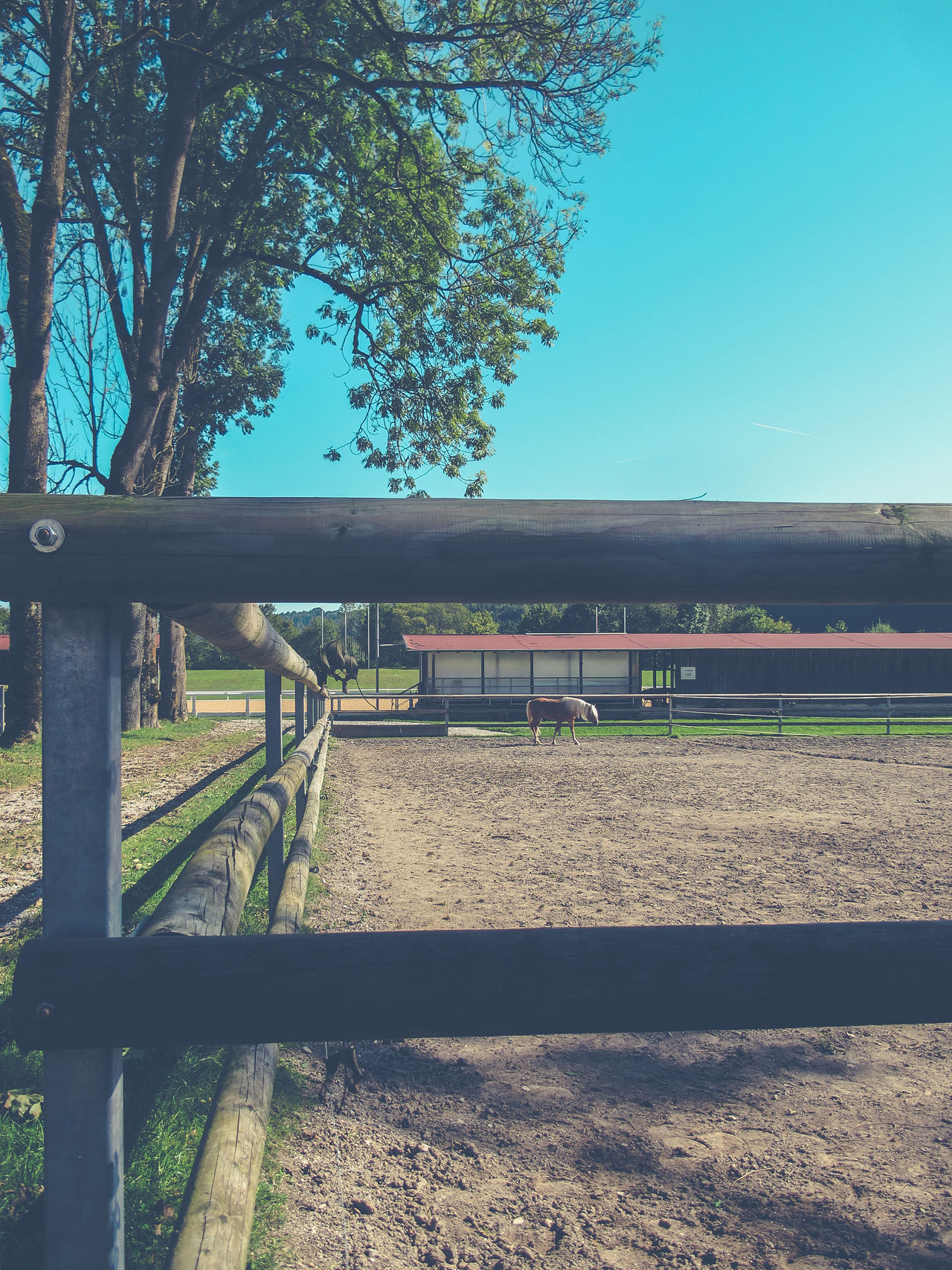 Animal Body Part Day Equine Equinephotography Horse Horses No People Outdoors Rail Transportation Railroad Track Sky Tree