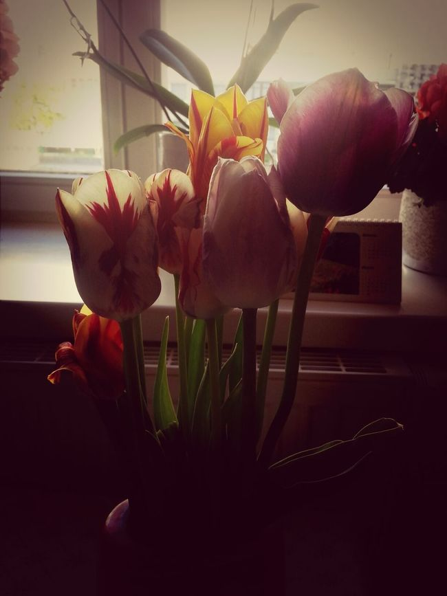 Tulips My Flower Obsession