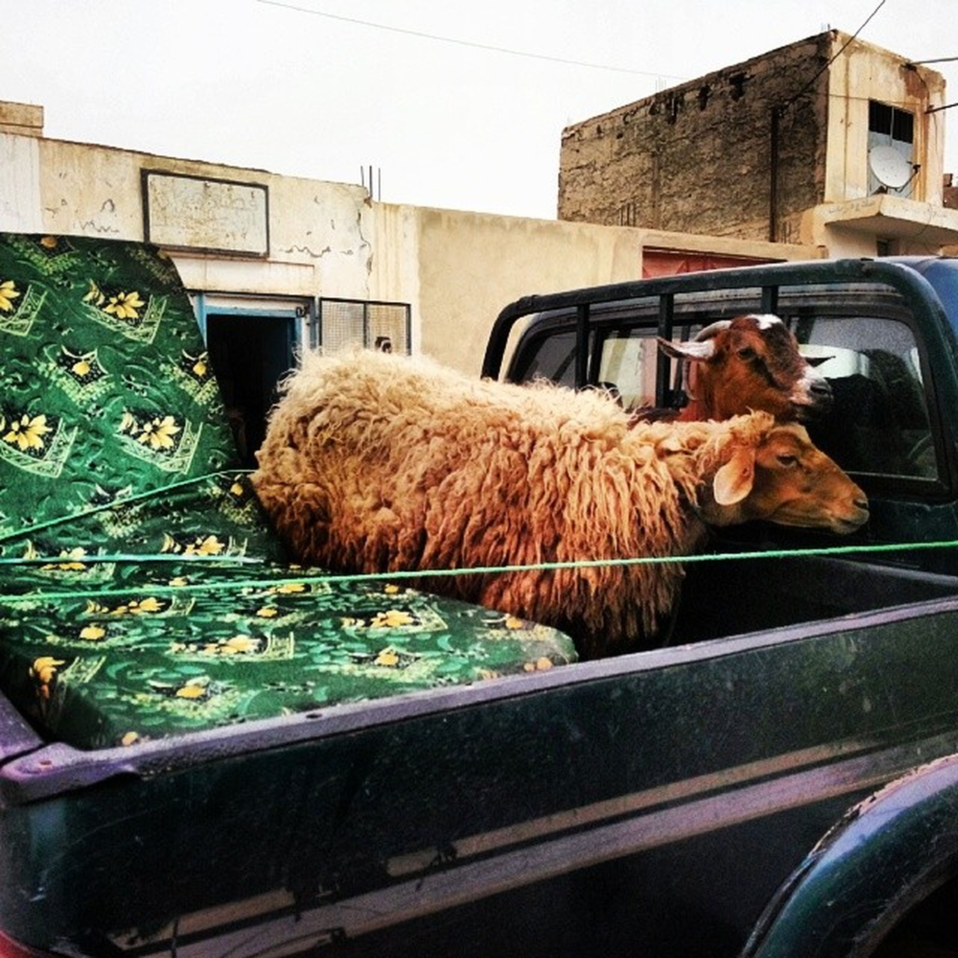 domestic animals, transportation, food, mode of transport, mammal, land vehicle, food and drink, animal themes, day, retail, car, stack, indoors, no people, sleeping, relaxation, full length, basket, pets