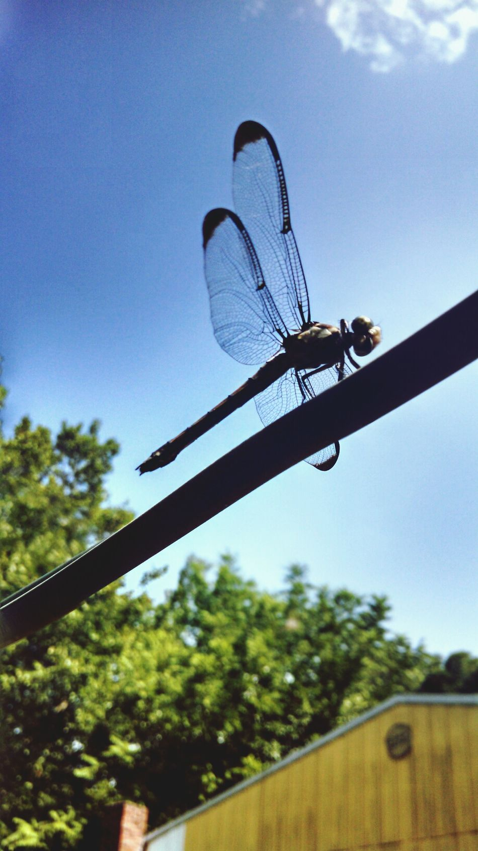 EyeEm Nature Lover Eye For Photography Dragonfly Up Close