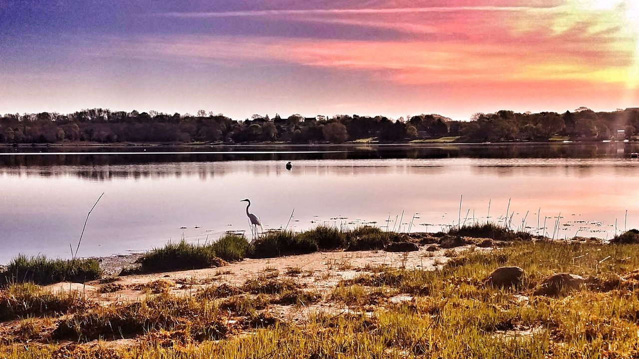 Reflection Lake Nature Water Beauty In Nature Tranquility Day Crane Birds Crane Beach Beach Multi Colored