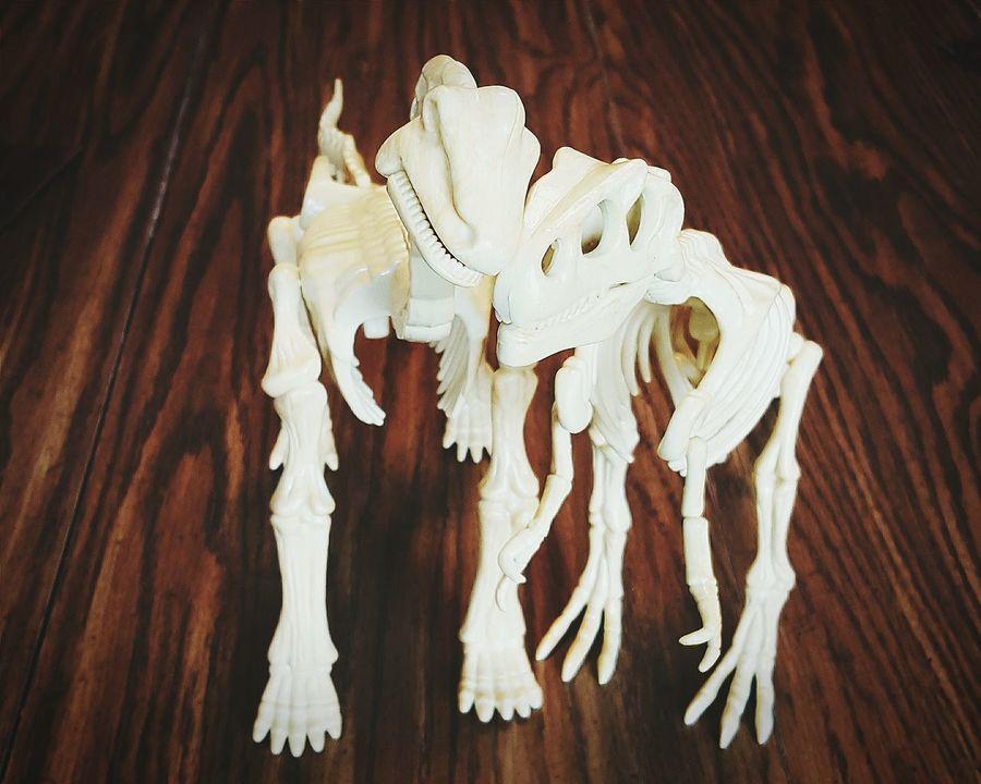 Dinos in love: Ancient Lovers 😂Thanks to @ShaifuddinAhmad for title Dinosaurs Dinosaur Model Skeleton Bones Dinosaur Bones Brachiosaurus Tyrannosaurus Science Learning Interspecies Friendship Love Friends Funny Silly FUNNY ANIMALS High Contrast VSCO Vscocam Showcase: February Youmobile